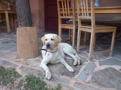 Perro en Las Águedas Alberguey Casa Rural